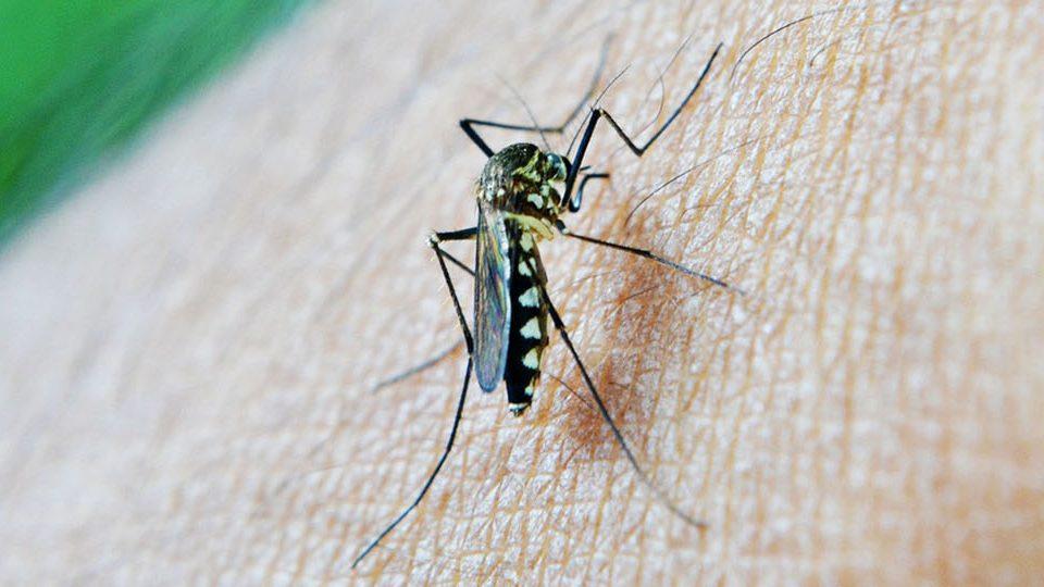 Disinfestare le zanzare nel giardino con Sagem Pulizie Milano